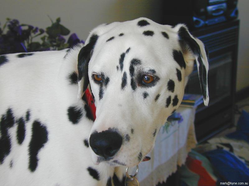احدث صور للكلاب الاليفة , اجمل صور الكلاب